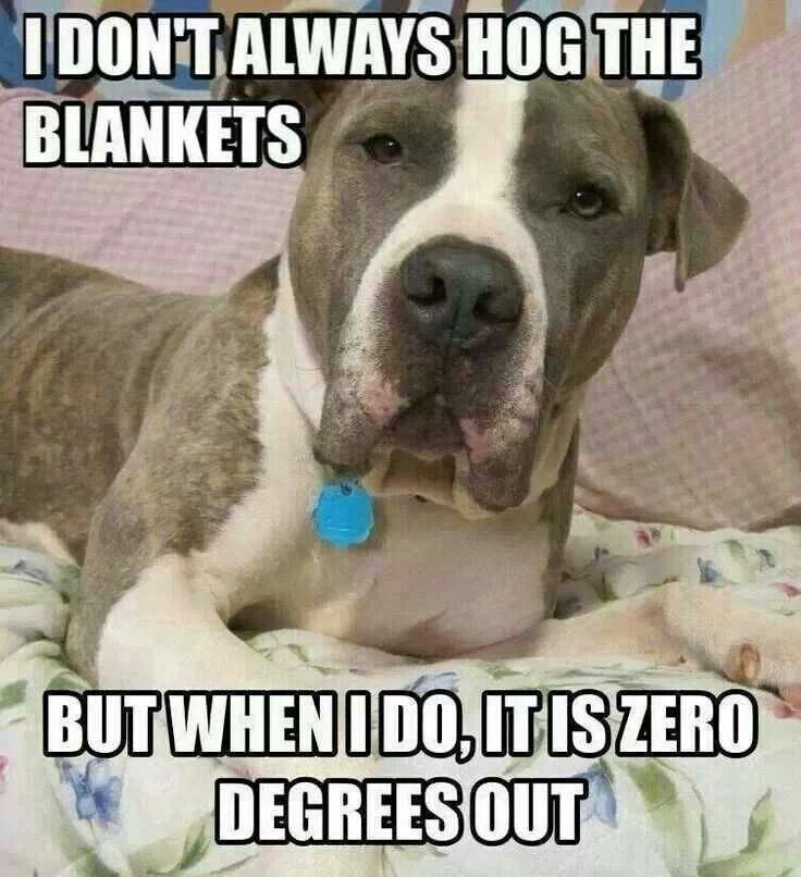 Image result for pet hog all the blankets pics