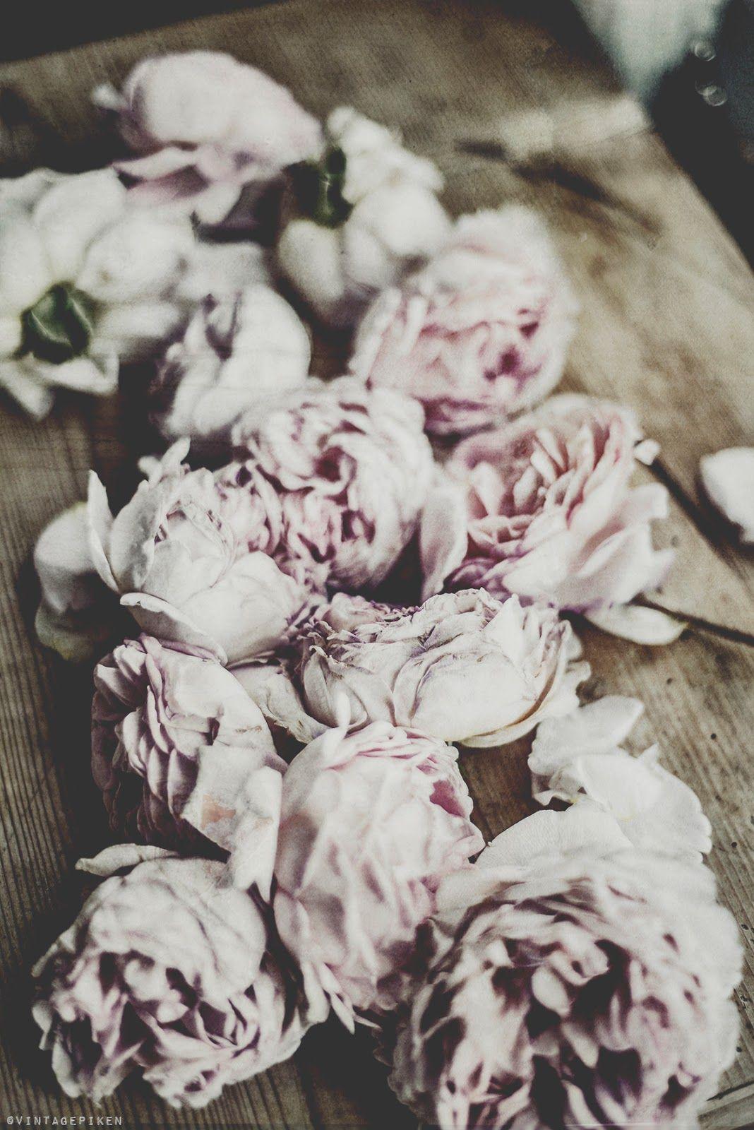 Faded beauty via vintagepiken Planting flowers, Dried
