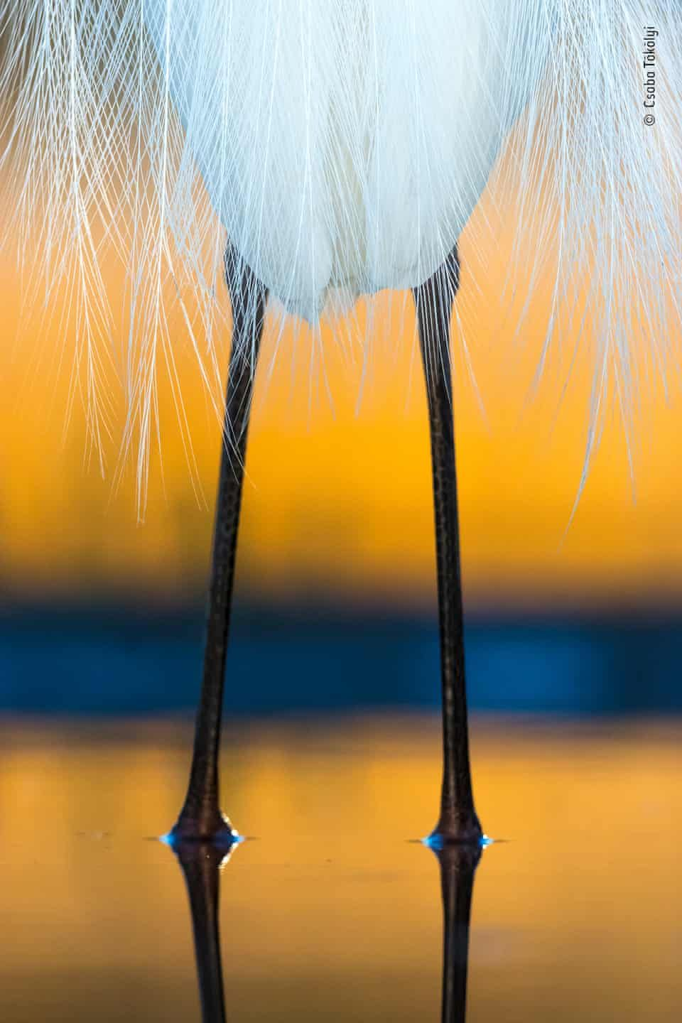 Wildlife Photographer Of The Year Lumix People S Choice Shortlist 2019 In Pictures Wildlife Photography Photography Awards Birds