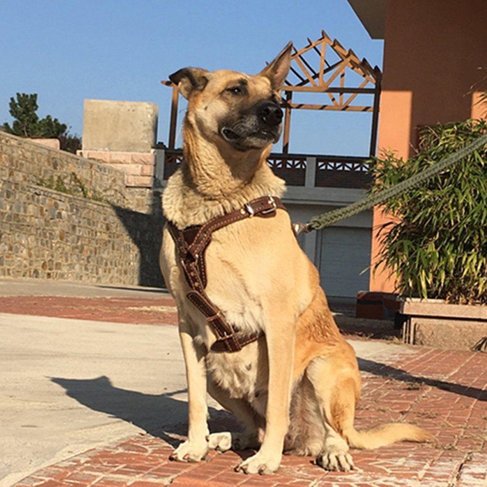 Pin On Dog Harness Ideas