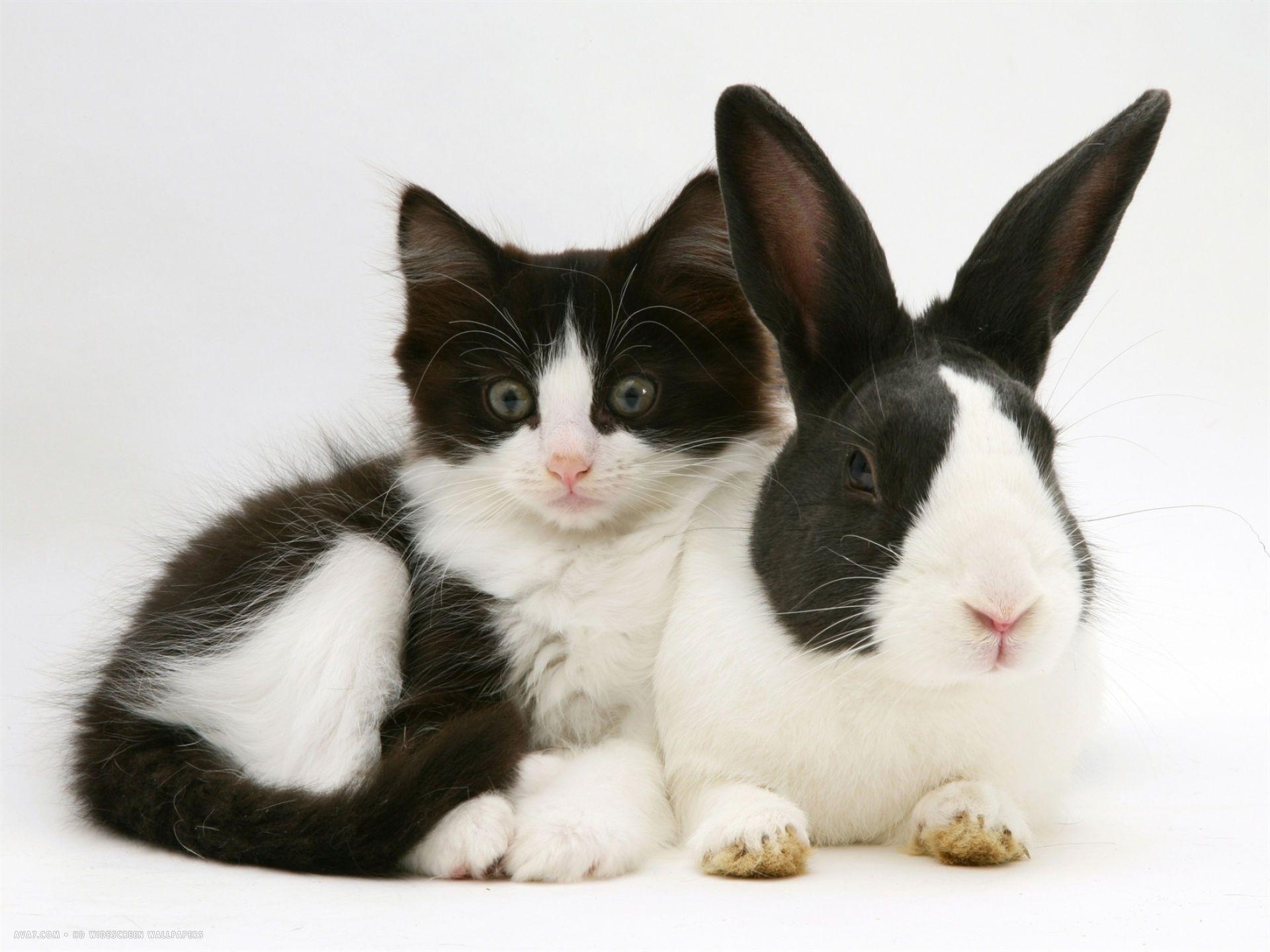 Black Dutch Rabbit With Black And White Kitten Black White Kittens White Kittens Ninja Cats