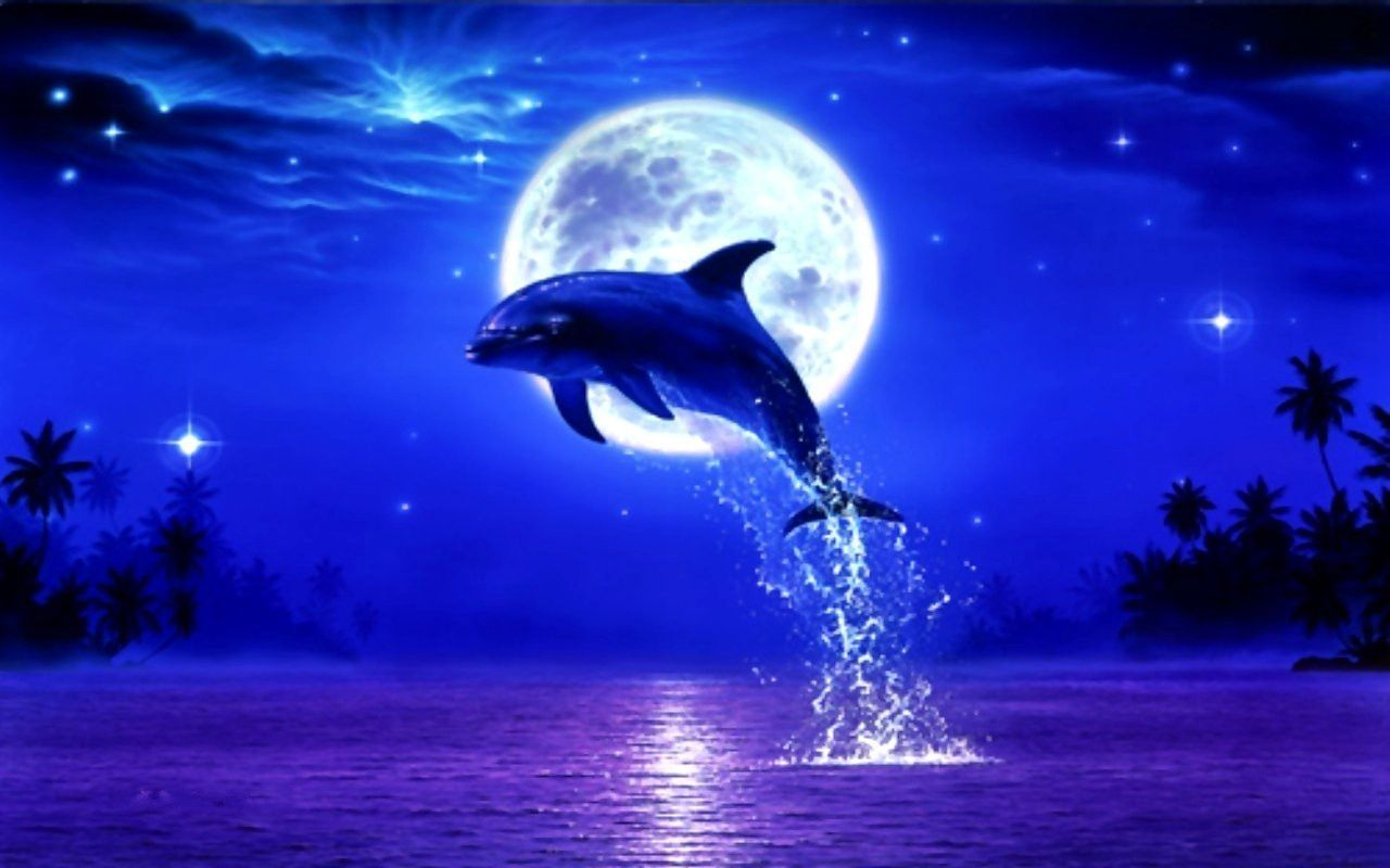 Beautiful Dolphin Pictures Google Search Animals I Love Dolphin Art Dolphins Animals