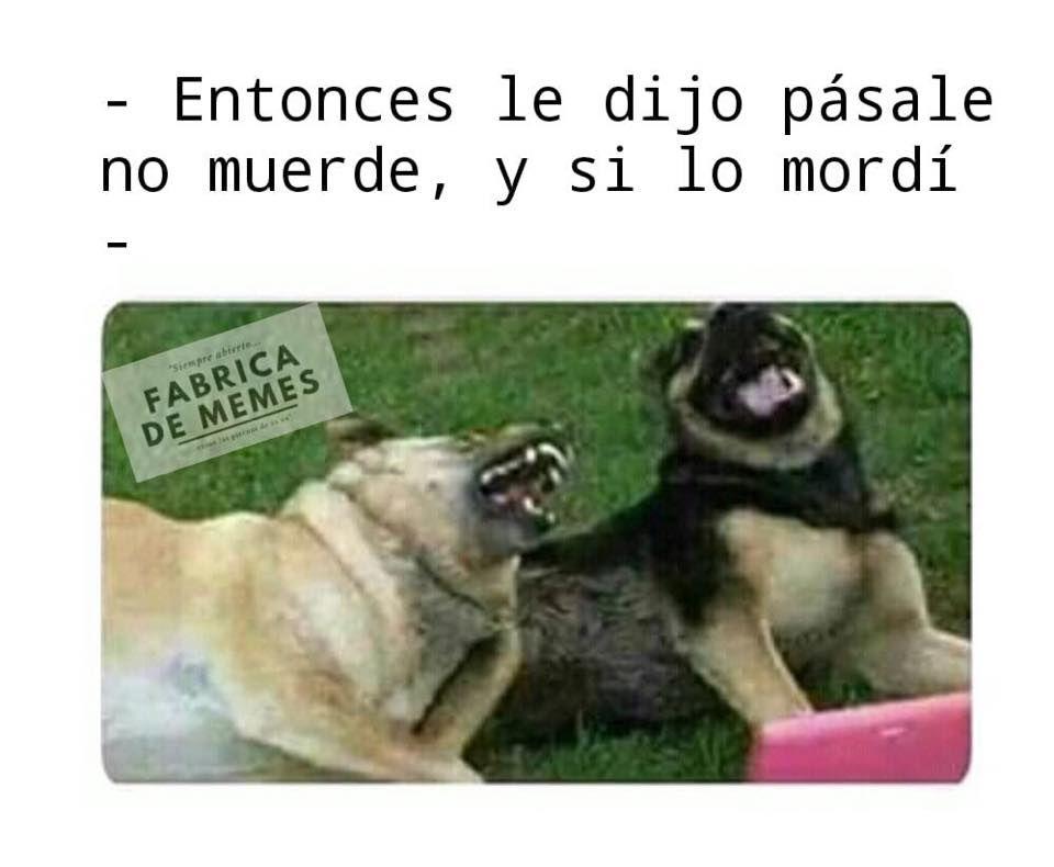 Memes Estupidos Memes Estupidos Memes Memes De Perros Chistosos