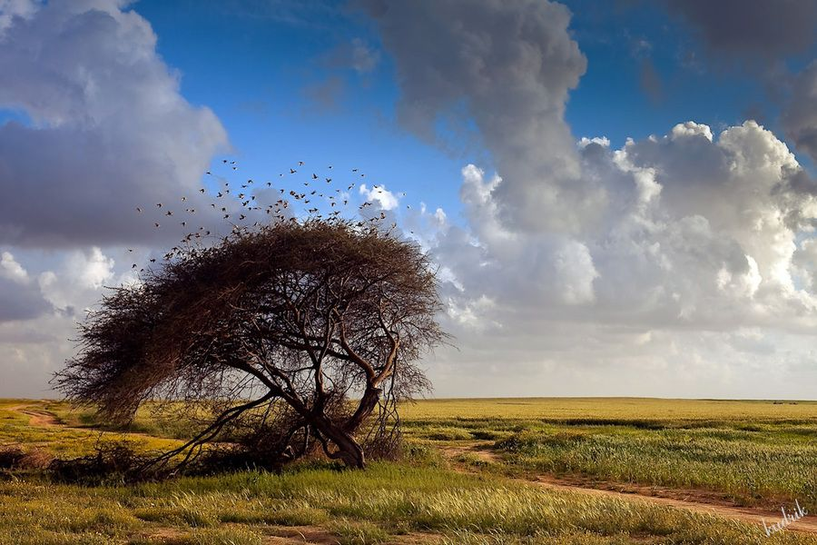 """spring"" by Alexey Kudrik, via 500px."