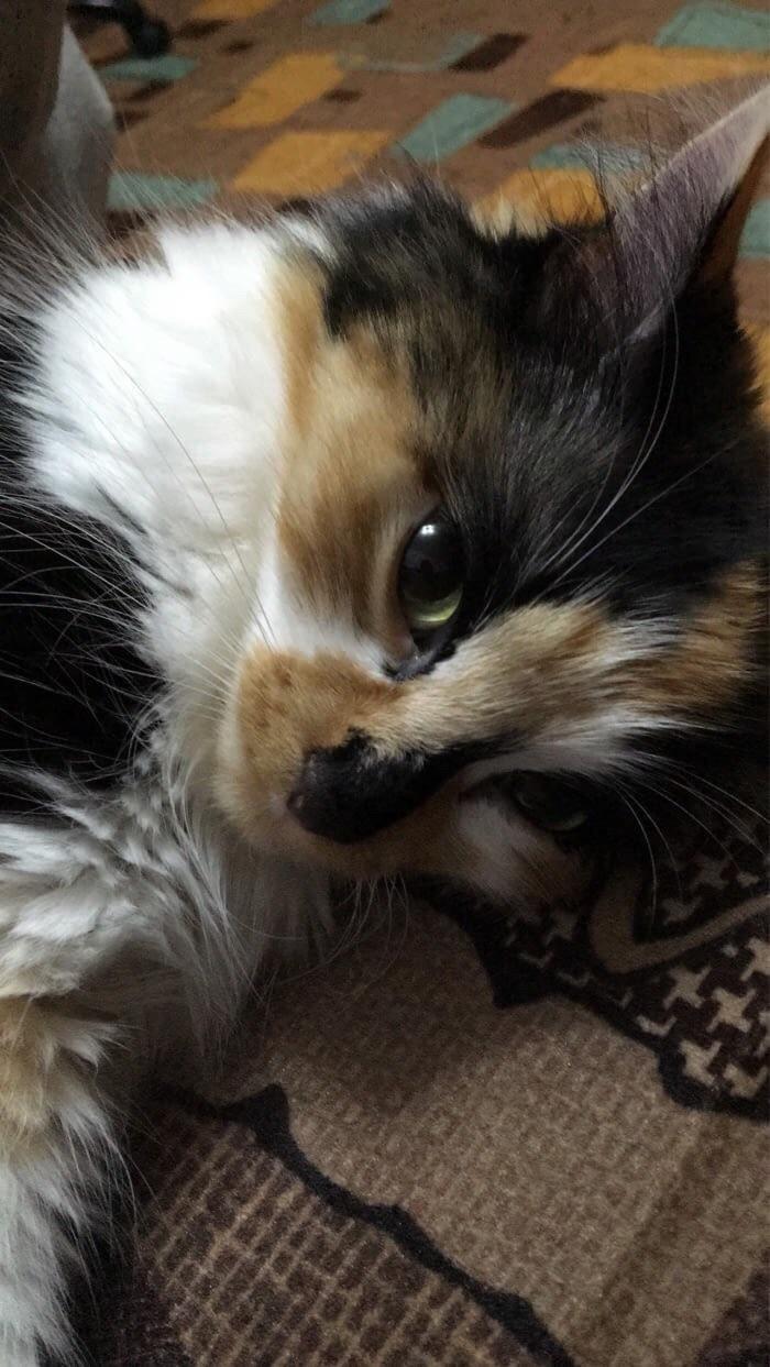My Cat Loves To Pose For Photoshttps I Redd It Nx7qa9ze4pi01 Jpg Cute Animals Cats Kittens Cutest