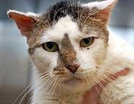 whitney-cat-petfinder-adopt less adoptable petweek-campaign. Hes eligible for the senior permanent foster program.