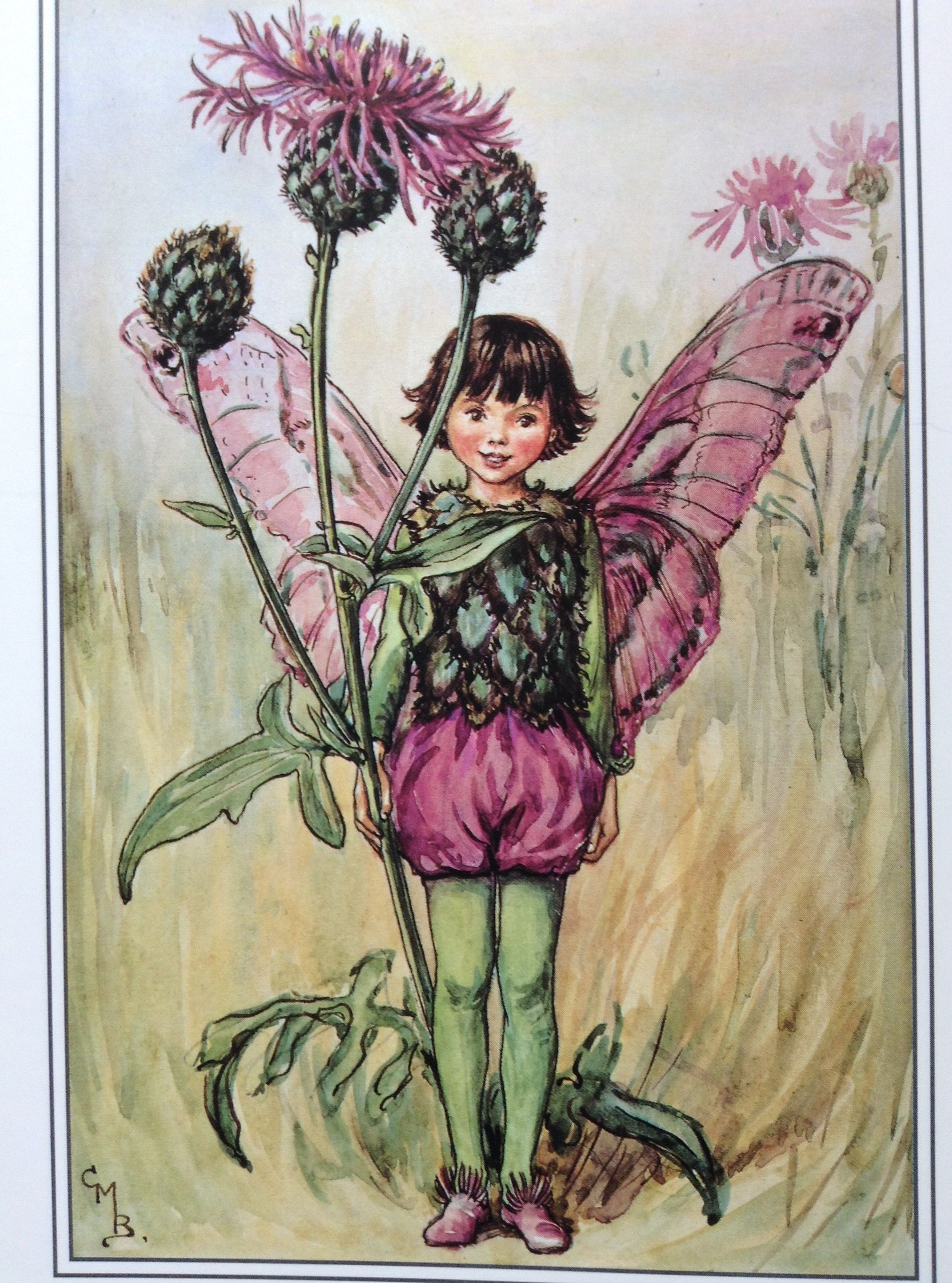 The greater Knapweed Fairy