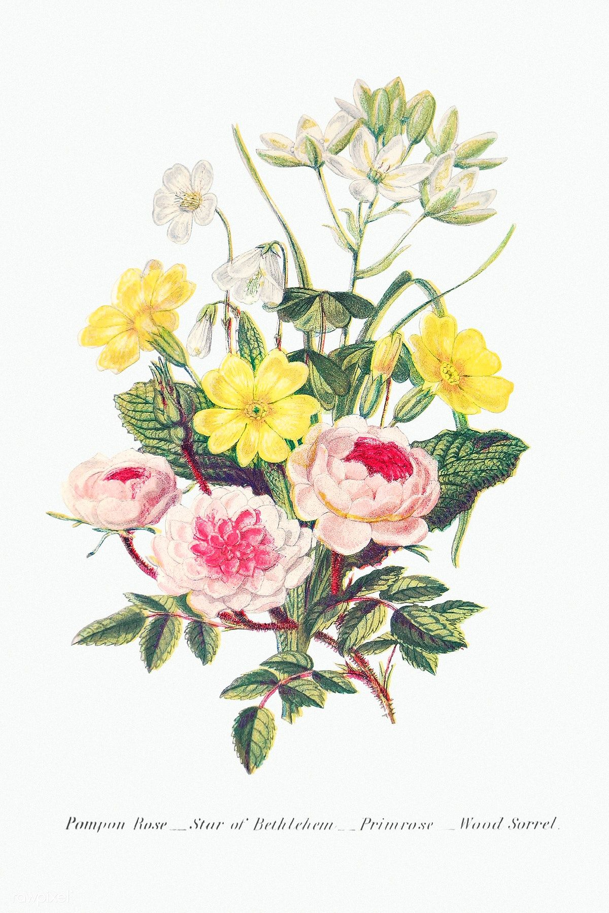 Download Premium Illustration Of Vintage Flower Bouquet Mockup 2099992 In 2020 Illustration Flowers Bouquet Vintage Flowers