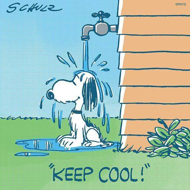 Pin by Mindy French on Snoopy (With images) Snoopy