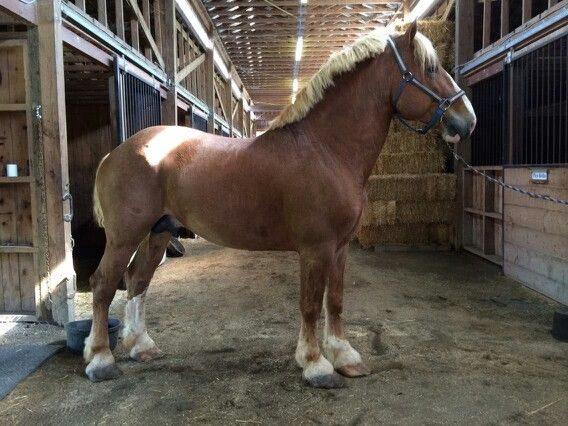 I love draft horses, they're so gorgeous!!