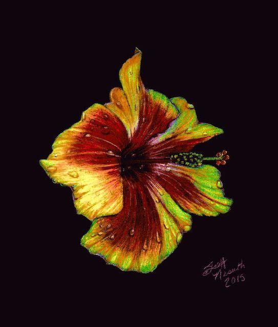 Gold Hibiscus In Colored Pencil On Black Paper Art Hibiscus