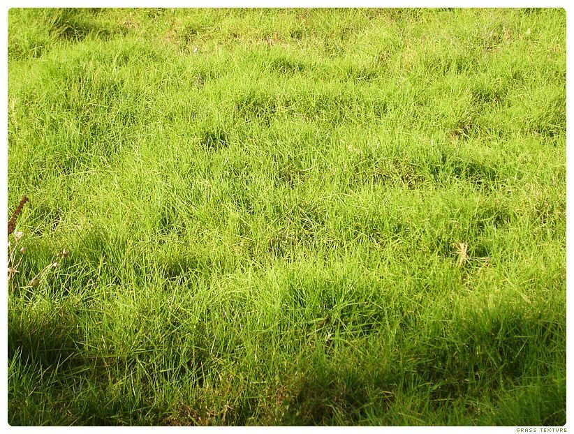 Grass Texture by ~levhita on deviantART | Muses (textures) | Grass
