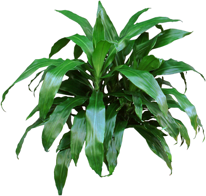 If mom is just starting to like houseplants and wants one that is perfect for beginners give - Green leafy indoor plants ...