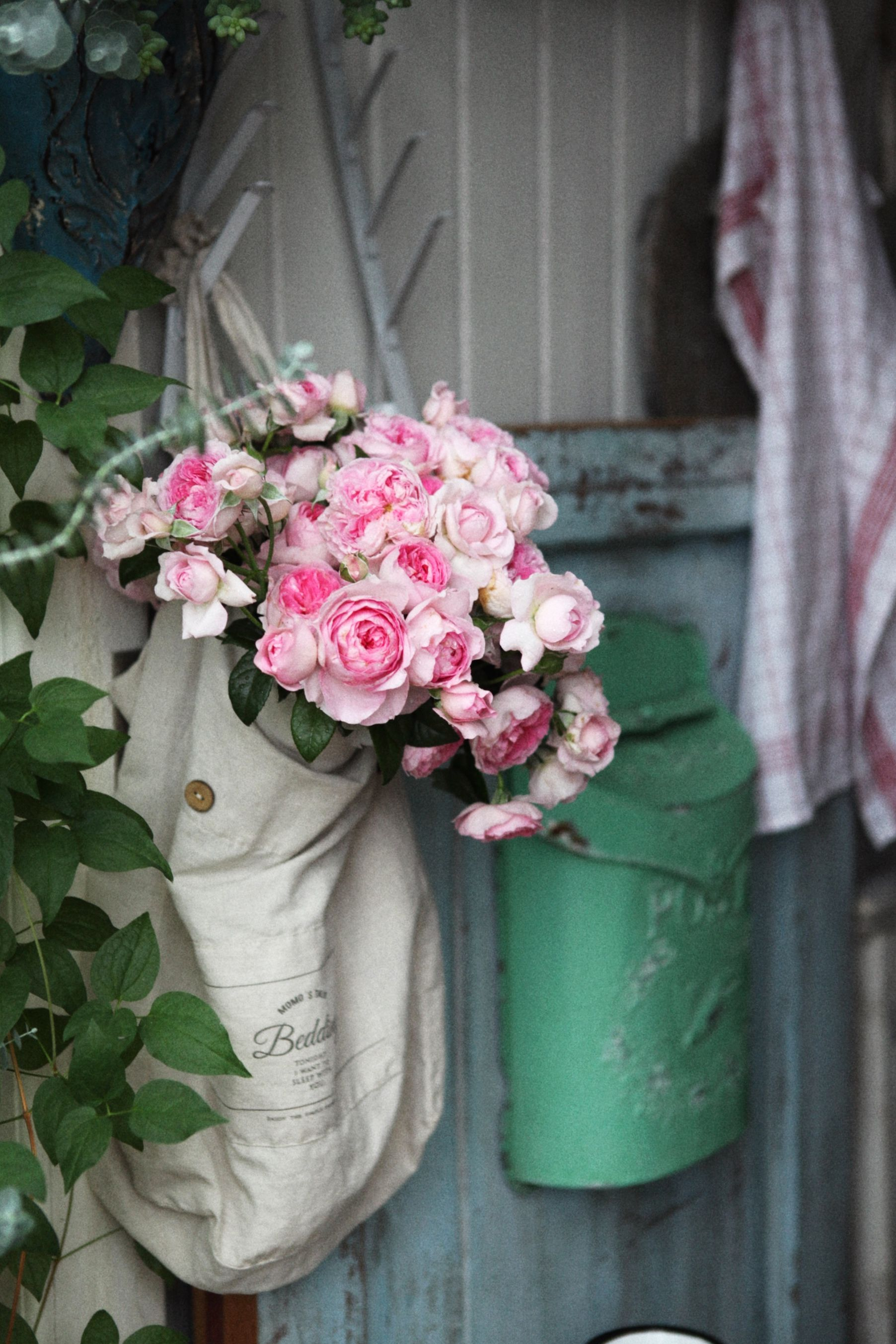 Pin by 杨 霞 on Places to Visit Growing roses, Rose buds