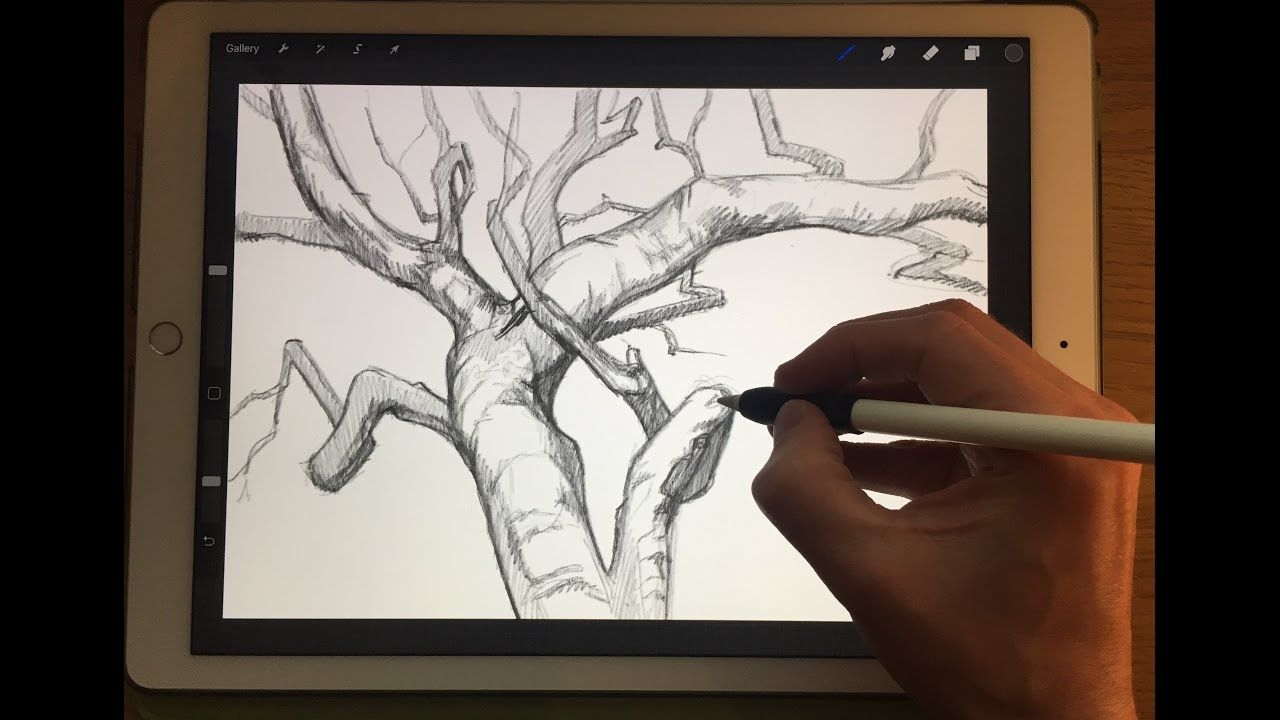 Drawing Straight Lines With Procreate : How to draw tree branches apple pencil drawing tutorial on ipad