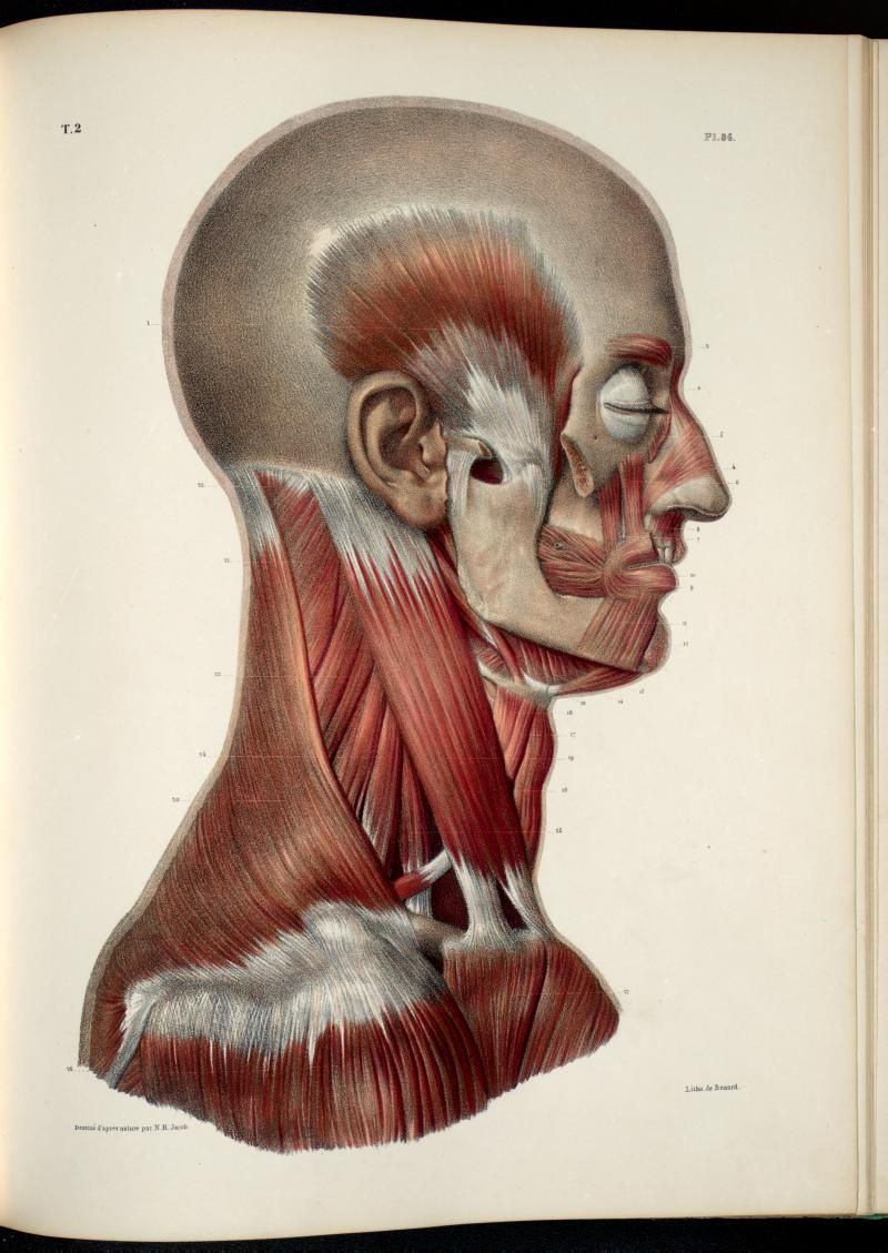 Anatomia Collection - UofT Libraries - Plate Description | human ...
