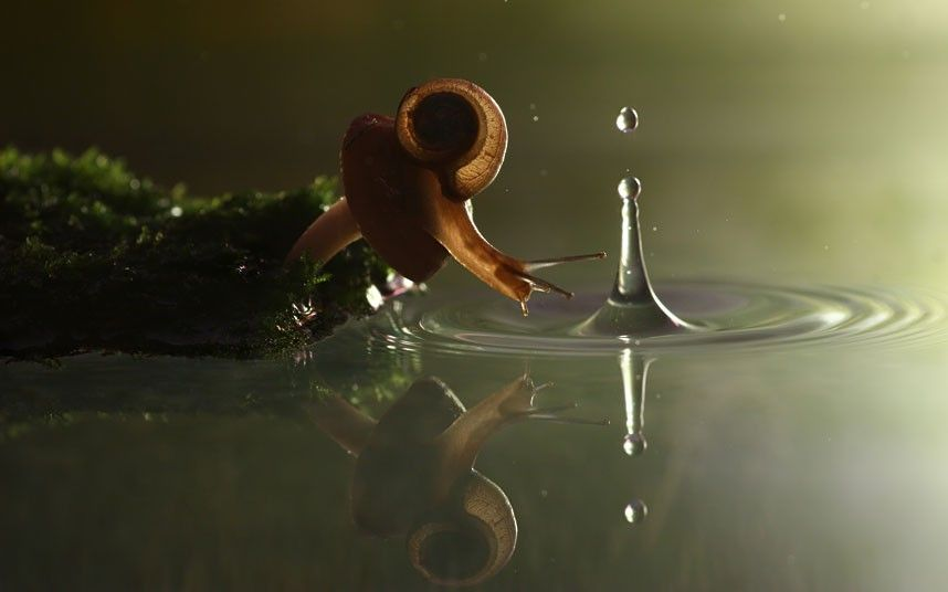 A snail perches on a mushroom in rainy weather. Picture: Vadim Trunov / Barcroft Media