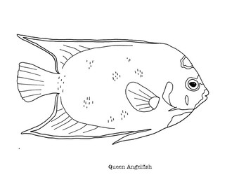 These Coloring Pages Feature A Realistic Line Drawing Of The Queen Angelfish The First Page Has The Species Coloring Pages Outline Drawings Fish Coloring Page