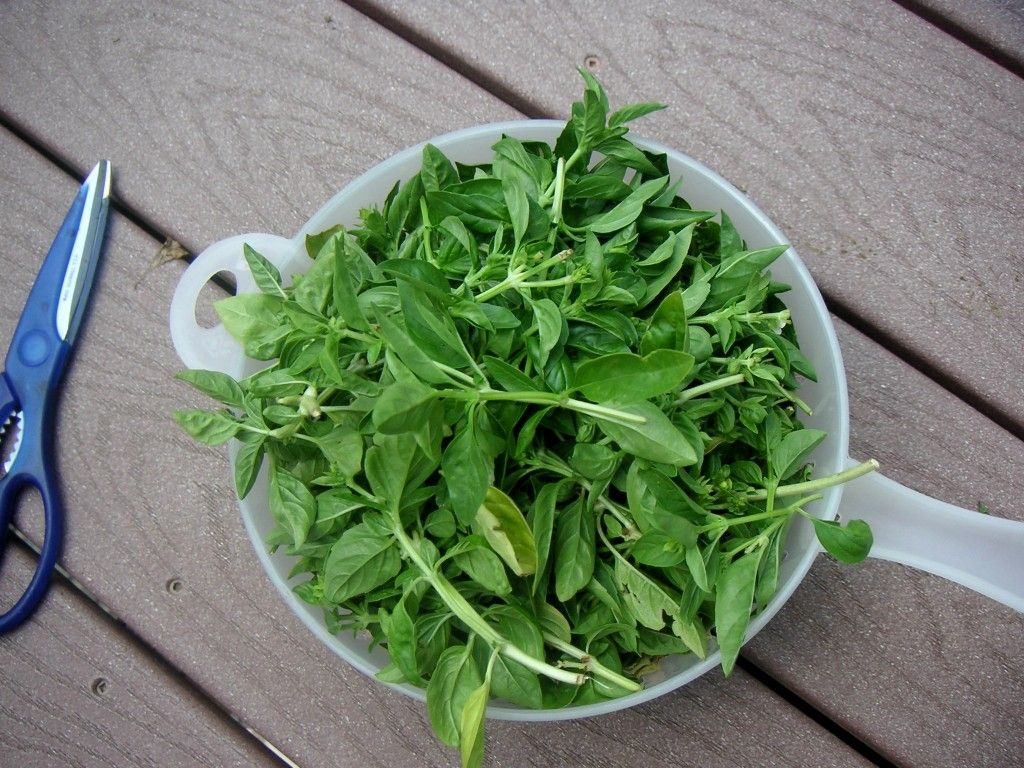 Spinach Basil Pesto with Lemon and Almonds (With images