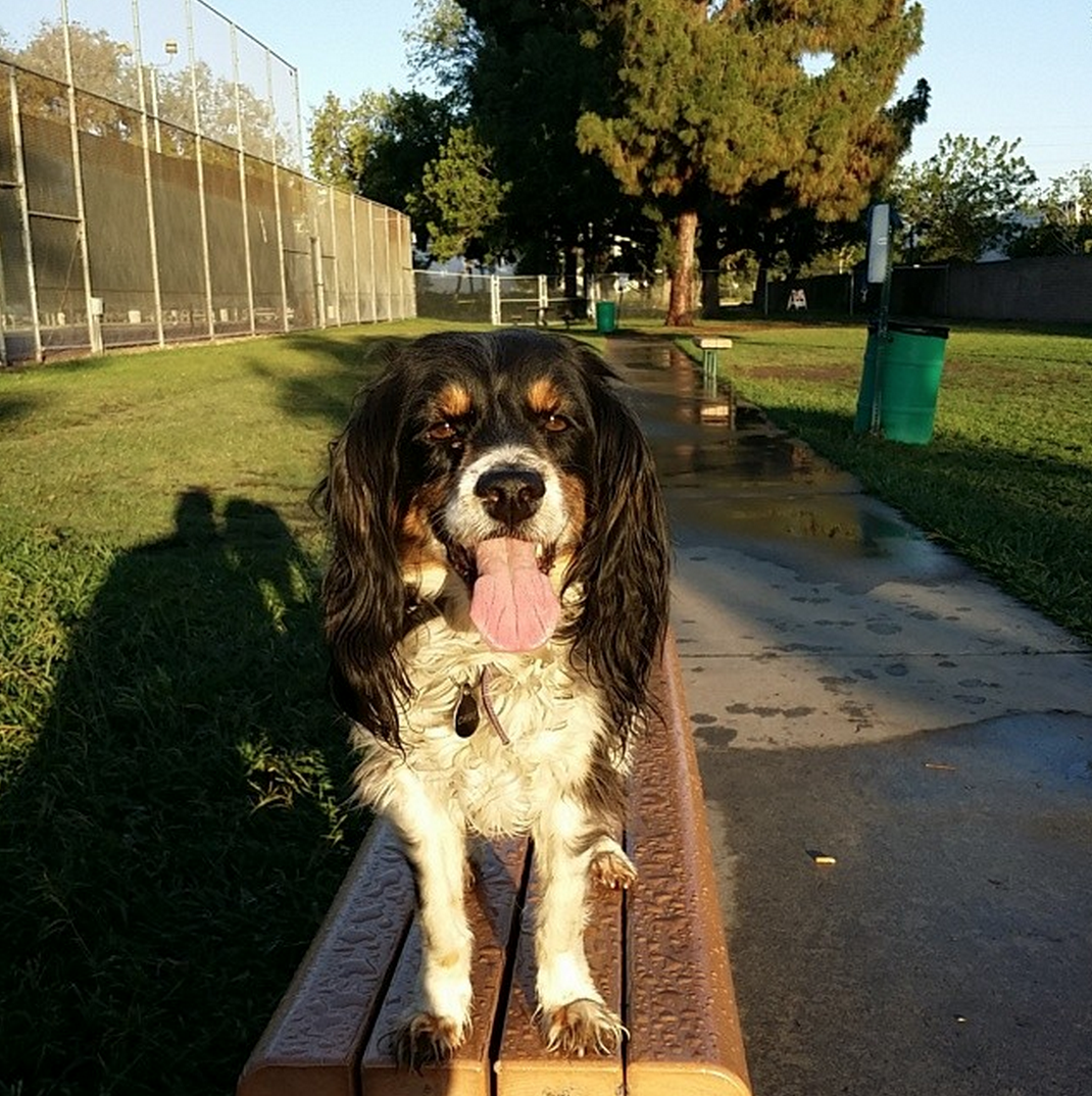 Tired and happy after an afternoon at George Bellis Dog Park  Buena