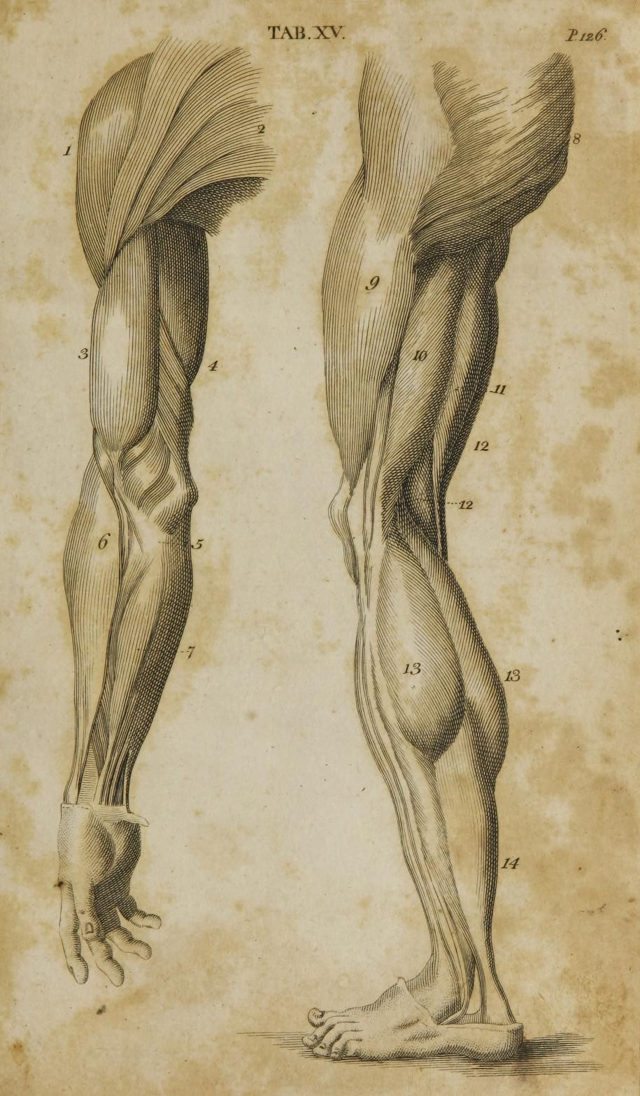 First Published Under The Title Anatomy Of The Humane Body In