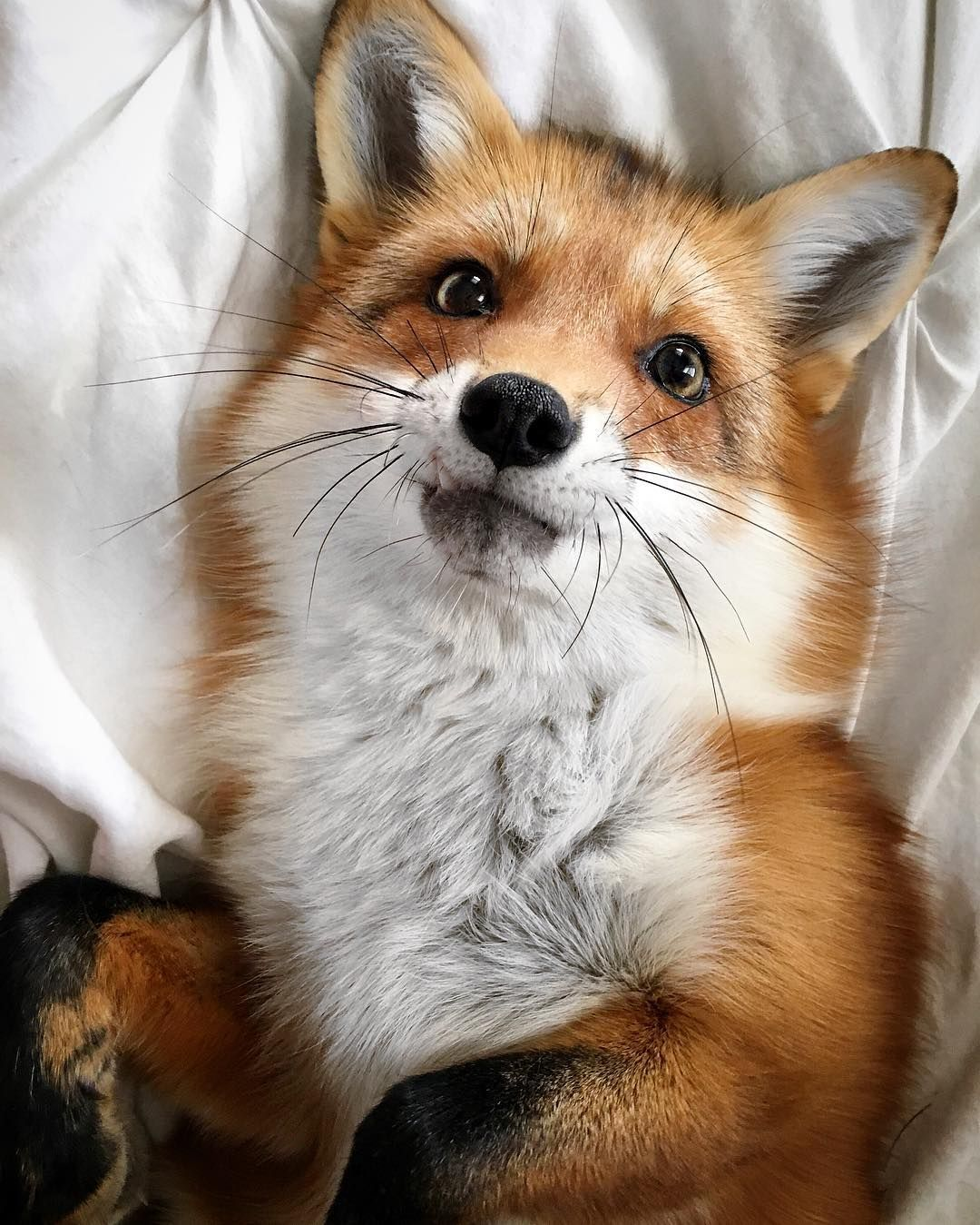 """""""Nothing like a happy fox to get rid of those Monday Blues"""""""