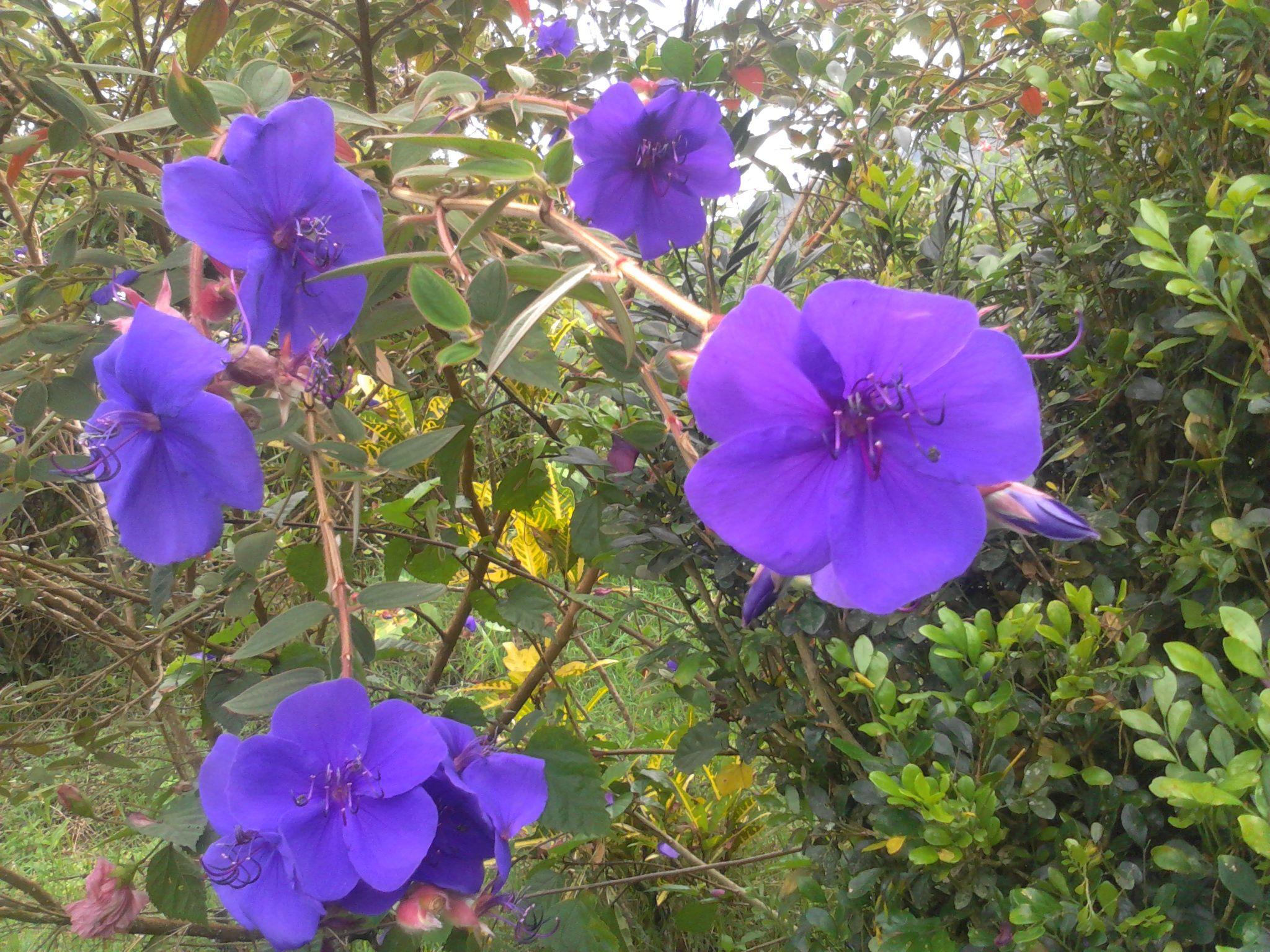 46++ Flores azules pequenas ideas in 2021