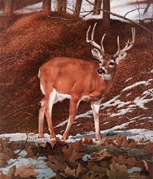 """""""Majesty"""" by Charles Frace I sat next to Charles as he worked on this painting. I can remember laughing about him fretting about all those leaves"""