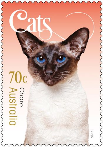 First they took over the internet, now stamps. Meet Charo, Bubu, Sweetie, Cato and Briony on our new Cats stamp issue released today: http://auspo.st/1DPQHTr #stampcollecting