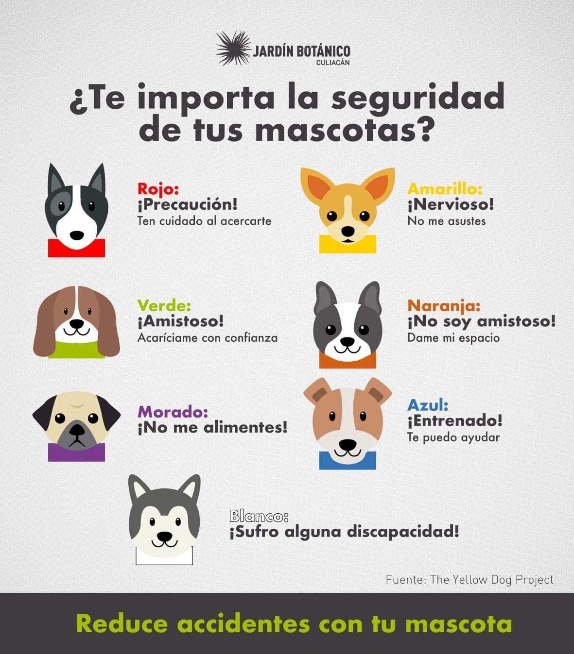Seguridad De Tus Mascotas Mascotas Perros Mascotas Lenguaje De Los Perros