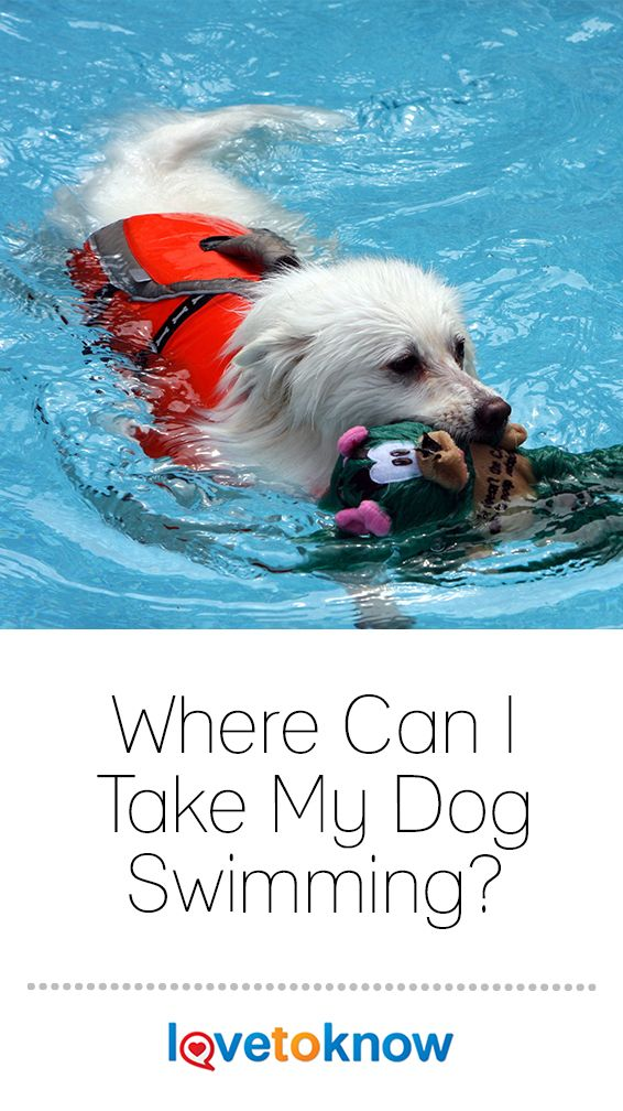 Where Can I Take My Dog Swimming? Cat nutrition, Dogs