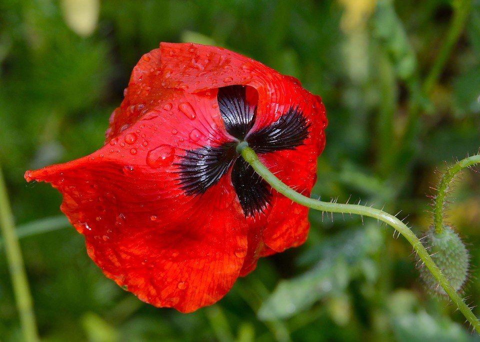 Такой яркий | Растения, Цветы