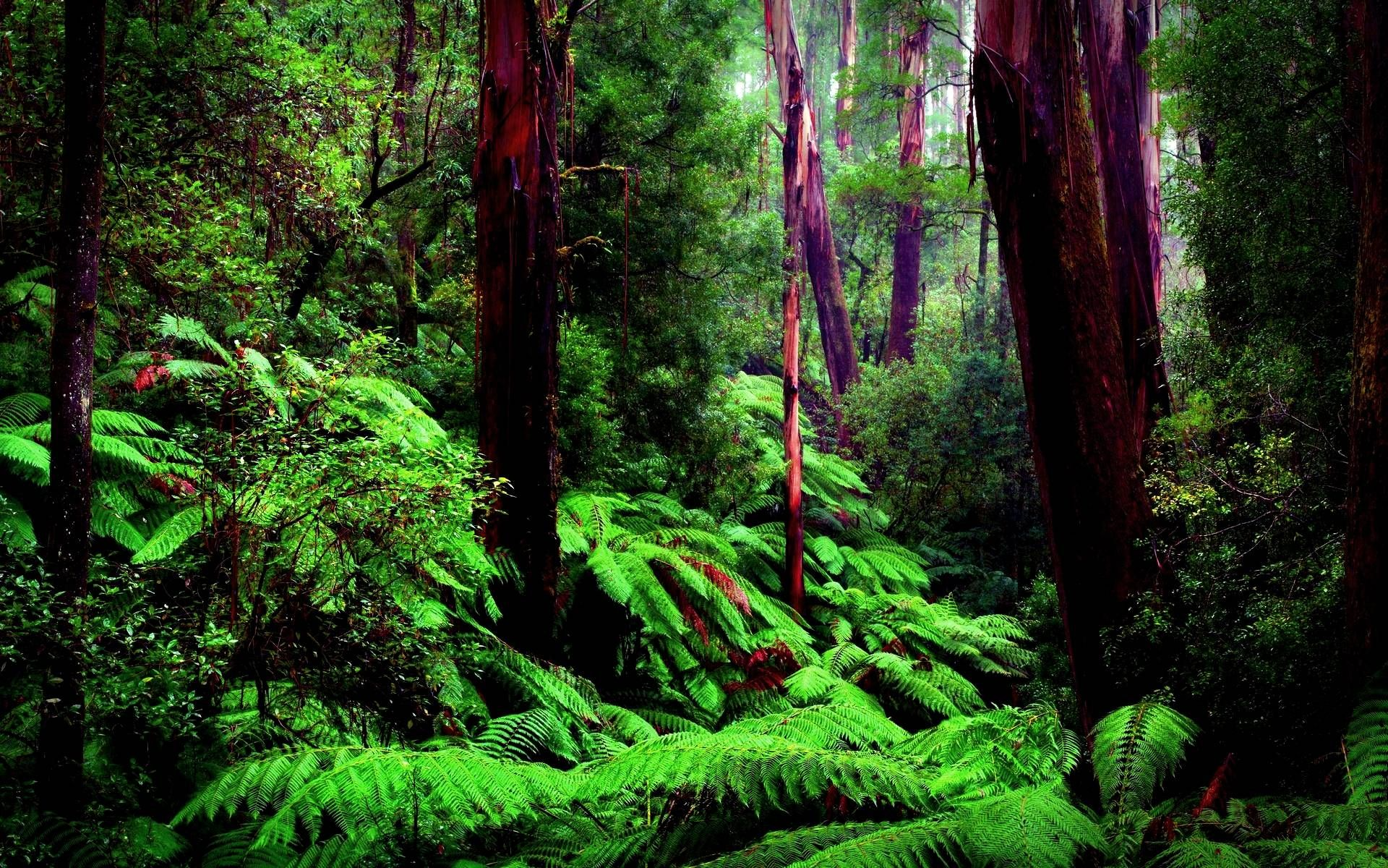Rainforest Wallpapers Full HD wallpaper search Amazon