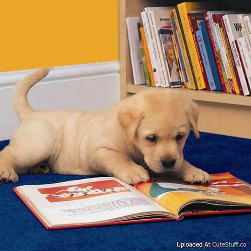 22 Puppies That Love Reading Puppies Cute Animals Funny Animals