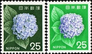 Japan, 1966. Hydrangea