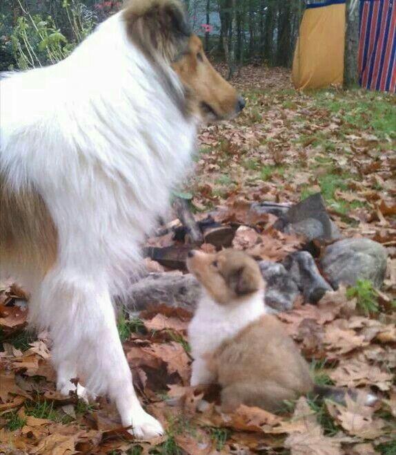 Cuteness Hunde Tierisch