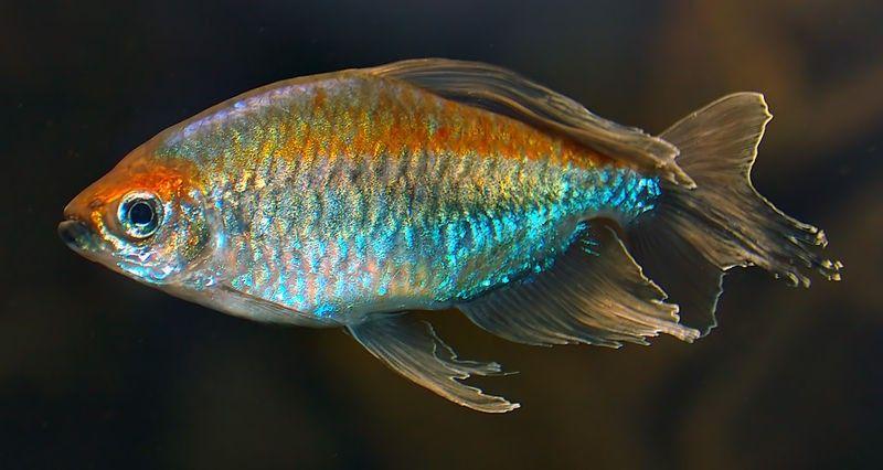 Pin On Freshwater Fish