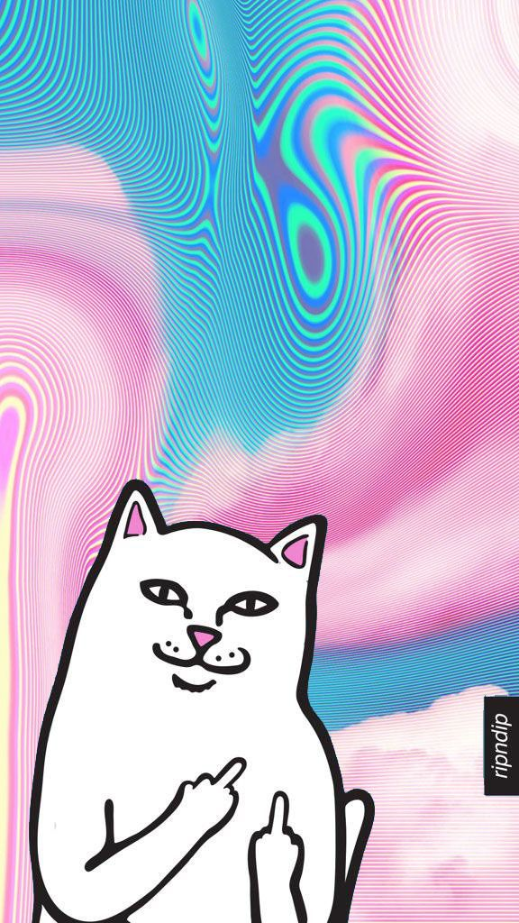 RIP N DIP White Cat W Middle Finger Ripndip Wallpaper I Tumblr