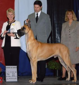 Lobato Great Danes Most Notables Great Dane Gentle Giant Dane