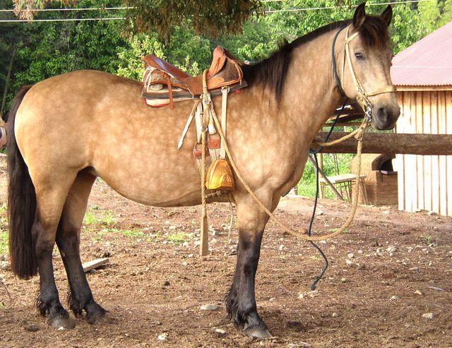Image result for chilean work saddles