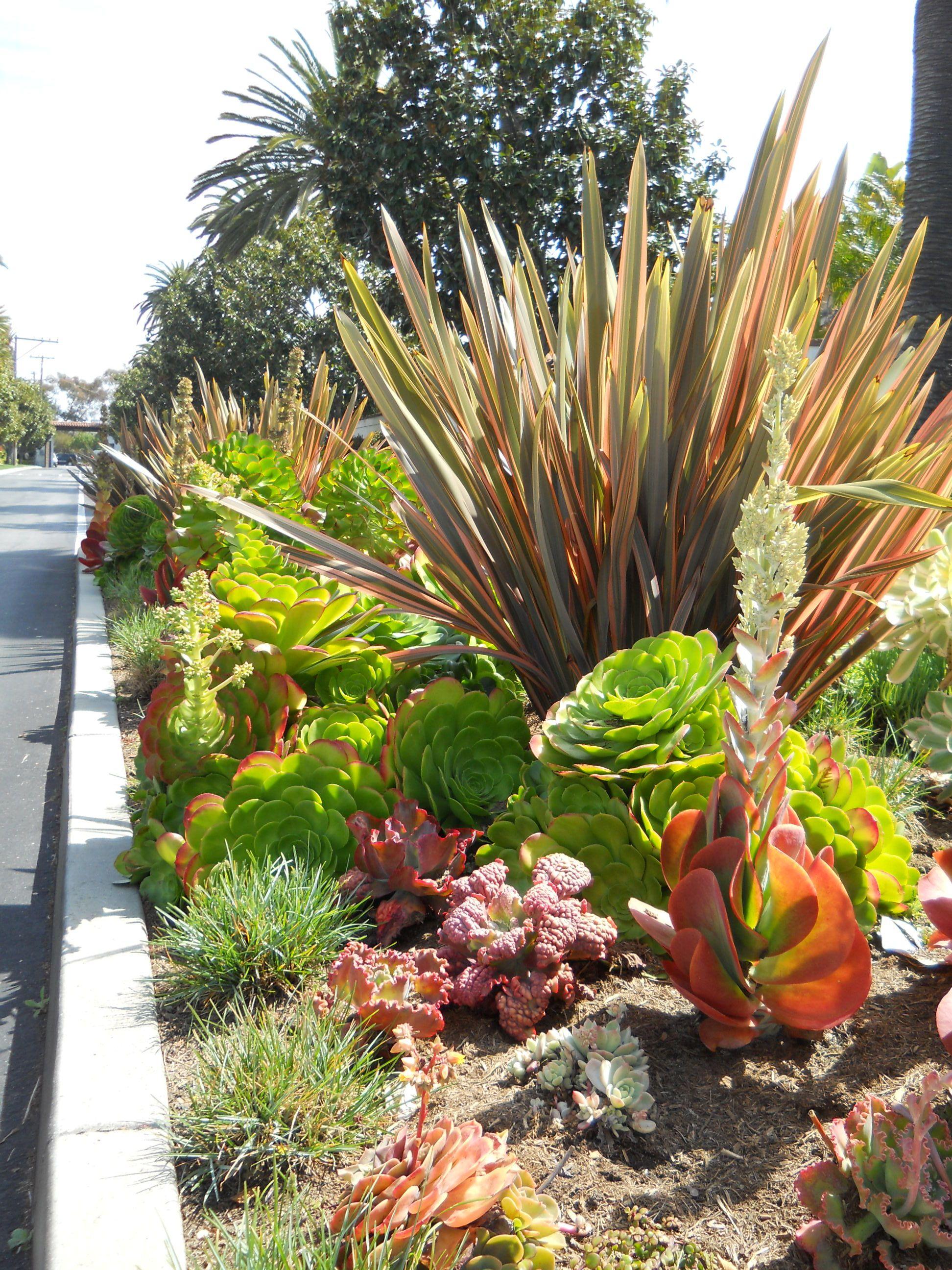Succulents Ca Friendly Http Rogersgardenslandscape Com