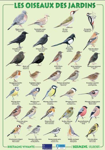 R sultat de recherche d 39 images pour les oiseaux des for Passereaux des jardins