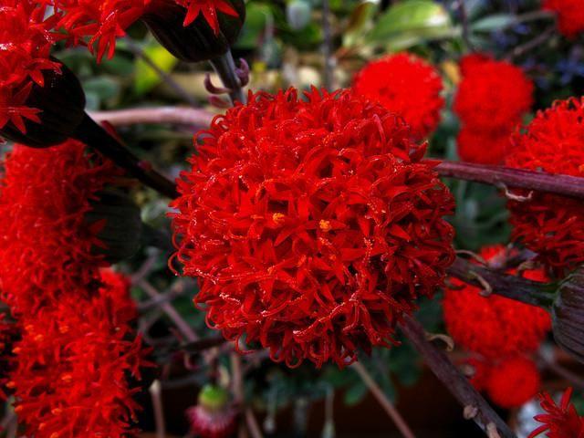 plantas de jardin y sus nombres - Buscar con Google | FLORES DEL ...