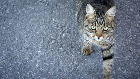 Kissa ei pidä muutoksista. /Yle.fi