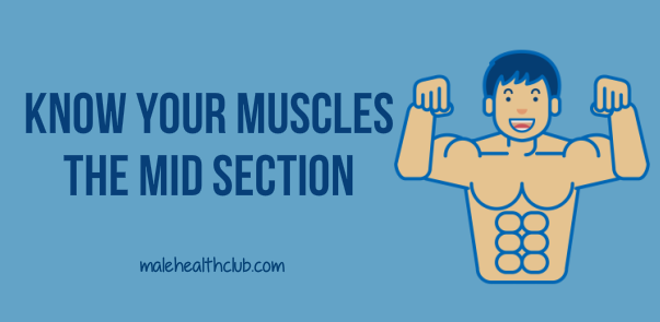 Know Your Muscles-- The Mid Area - http://malehealthclub.com/know-your-muscles-the-mid-section/