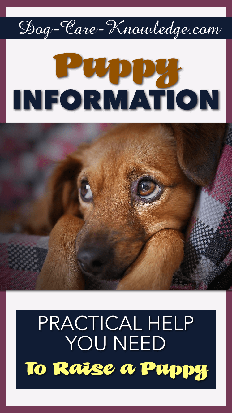 Puppy Information Practical Help You Need To Raise a