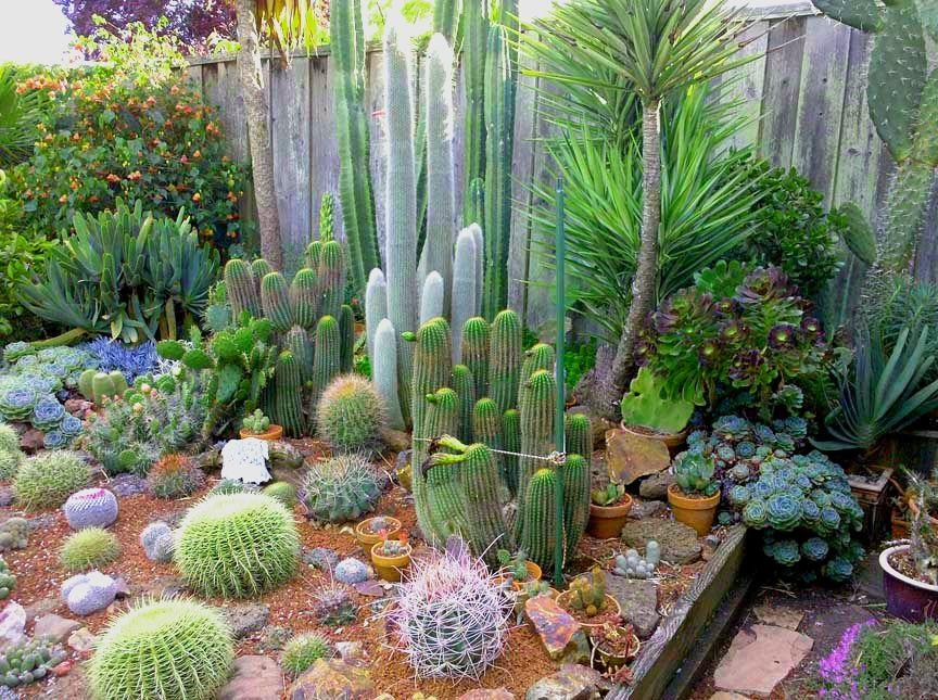 Indoor cactus garden ideas indoor cactus garden ideas for Cactus in pots ideas