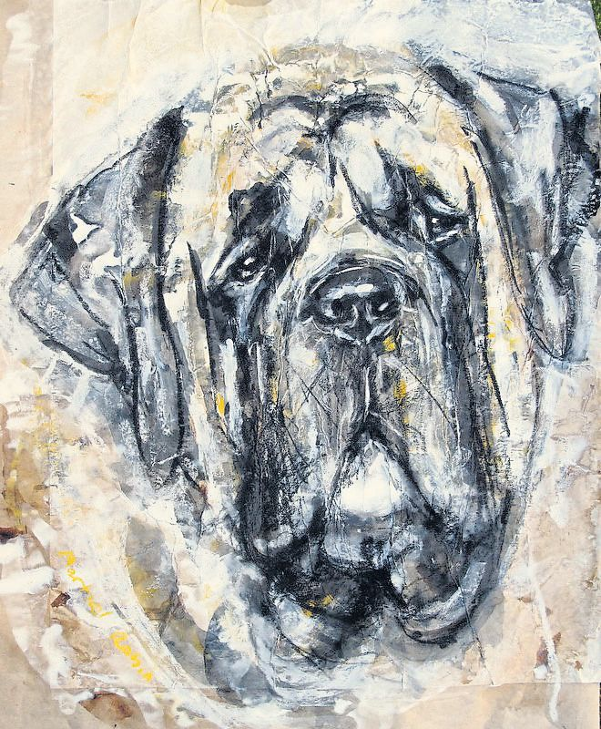 Magnificent Molossers on show at KC Molosser, Dogs of