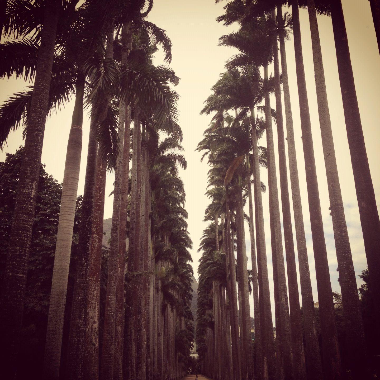 Jardim Botânico, Rio.