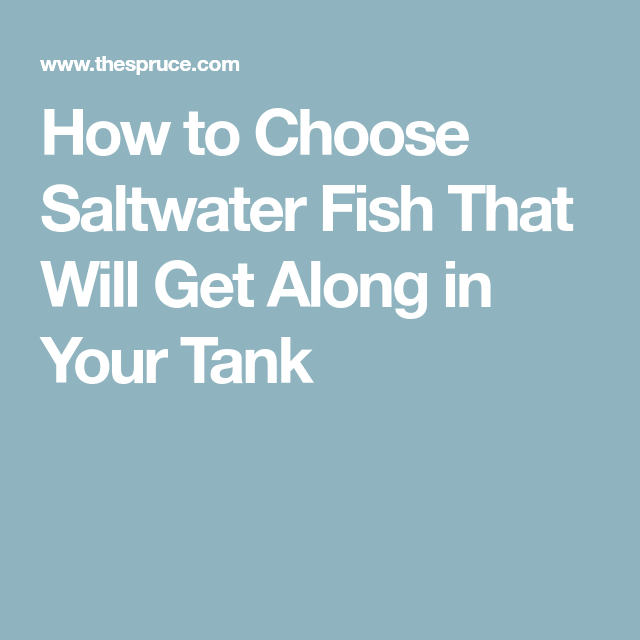 How to Choose Saltwater Fish That Will Get Along in Your ...